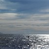 """1-05<br /> whale watching trip on Sanctuary Cruises<br /> one whale's """"flukes"""""""