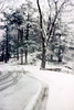 woods during snow fall 19 March 1961