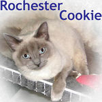 Rochester Cookie adopted from CHAC on 2/4/06.