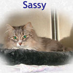 Sassy adopted from CHAC on 1/14/06.  Sassy is just adorable through and through. Her owner passed away and this is one of the little fur angels that was healthy and happy but, homeless. We know she will be a bright spot in someone's life, day after day.