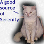 Serenity adopted from CHAC on 1/25/06.  Serenity is determined to find a forever family. She has a great purr that will help you relax after a stressful day. Adopt Serenity Now!