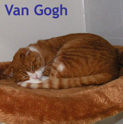 Van Gogh adopted from CHAC on 1/2/06.  Van Gogh came to Feline Friends battered and bruised but is now a picture of perfect health.   He's eager to warm your lap, monitor the arrival and departure of guests, and oversee your household activities.