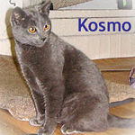 Kosmo adopted from CHAC on 1/7/06.  Kosmo was abandoned when his former owner moved and chose not to take Kosmo along.  But now he's found a family that will never let him go.  Lucky kitty!