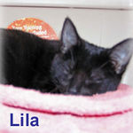 Lila was adopted out of her foster home on 1/29/06.