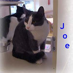 Joe adopted from CHAC on 1/15/06.