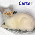 Carter adopted from CHAC on 1/30/06.