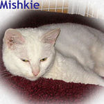 Mishkie adopted from CHAC on 1/20/06.