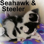 Seattle Seahawk and his brother Pittsburgh Steeler were adopted from SBVH on 2/8/06.