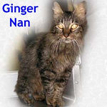 Ginger Nan adopted from CHAC on 1/14/06.