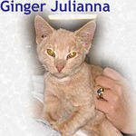 Ginger Julianna adopted on 1/8/06.  Ginger Julianna is a slender, delicate little lady.  She is too proper to ask for attention, but soaks it up when freely offered.