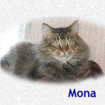 Mona adopted from CHAC on 1/15/06.  Mona is an independent lady that loves strokes behind her ears. She is a laid back cat, more inclined to recline than zoom around your house knocking things over.