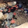 Feb. 1991<br /> Marine World, Vallejo, CA<br /> Fish ponds