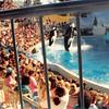 Feb. 1991<br /> Marine World, Vallejo, CA