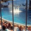 Feb. 1991<br /> Marin World, Vallejo, CA