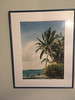Bahama palm trees