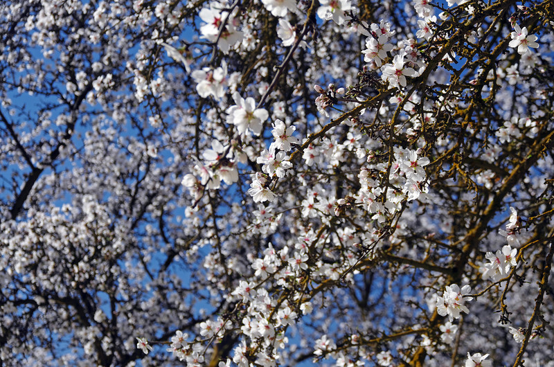 How many blossoms can you see?