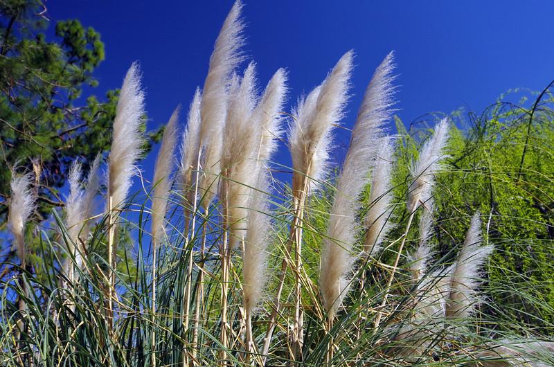 Sawgrass Flowers.