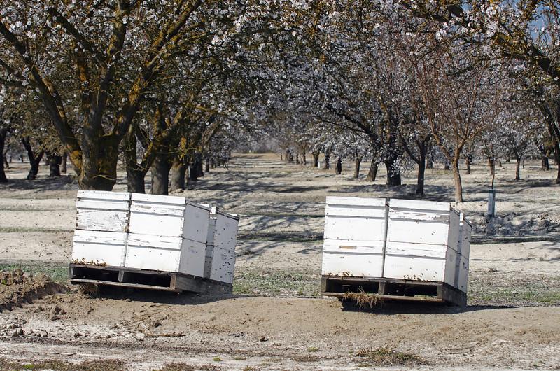 Buzzy-Bees.