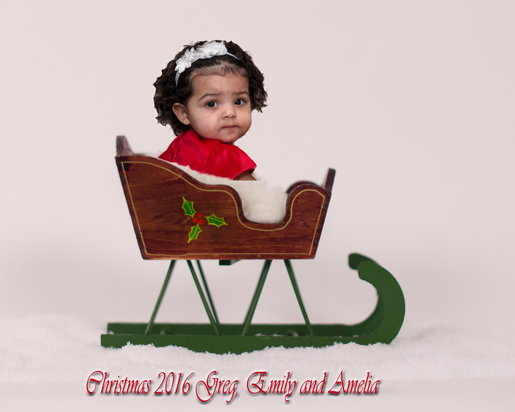 Holly Berry Sleighamelia