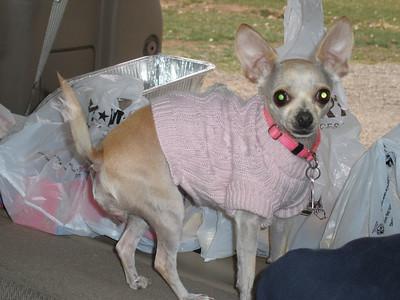 Suzie hasn't left van yet, not sure about this outdoors stuff