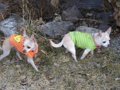 Suzie and Tweety