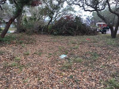 I hate oak trees