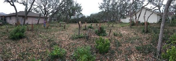 43 trees cut so far (30 Dec 2017)