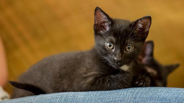 2012-09-12 Kittens-16 Web