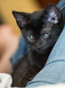 2012-09-12 Kittens-7 Web