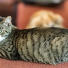 2012-09-12 Kittens-9 Web
