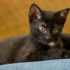 2012-09-12 Kittens-19 Web
