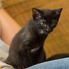 2012-09-12 Kittens-13 Web