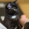 2012-09-12 Kittens-5 Web