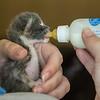 2012-09-12 Kittens-26 Web