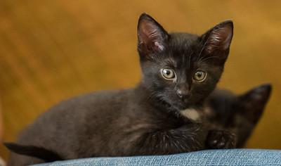 2012-09-12 Kittens-17 Web
