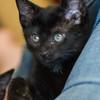 2012-09-12 Kittens-8 Web