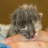 2012-09-12 Kittens-1 Web