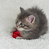 2015-05-16 FosterKitties-79_PRT