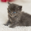 2015-05-16 FosterKitties-102_PRT