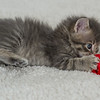 2015-05-16 FosterKitties-85_PRT