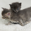 2015-05-16 FosterKitties-59_PRT
