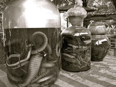 Reptilian elixers reputed to improve health, strength, and vitality. Luang Prabang, Laos, 2009
