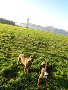 Hobbes and Koa, Chrissy Field, San Francisco, 2011