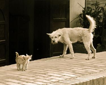 Dog vs. Cats, Luang Prabang, 2009