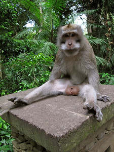 Monkey in Ubud Monkey Forest, Bali, Indonesia, 2010
