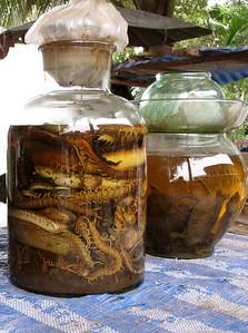 Reptilian and insect elixers....for human consumption. Luang Prabang, Laos, 2009