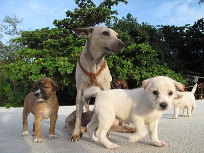 Beach dogs in Koh Samet, Thailand, 2009