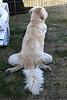 Cute dog sprawl.