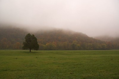 Fog in Boxley Valley. Near Ponca, AR.  Buffalo National River