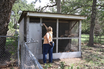 IMG_6813 - the chicken coop (coyote proof)